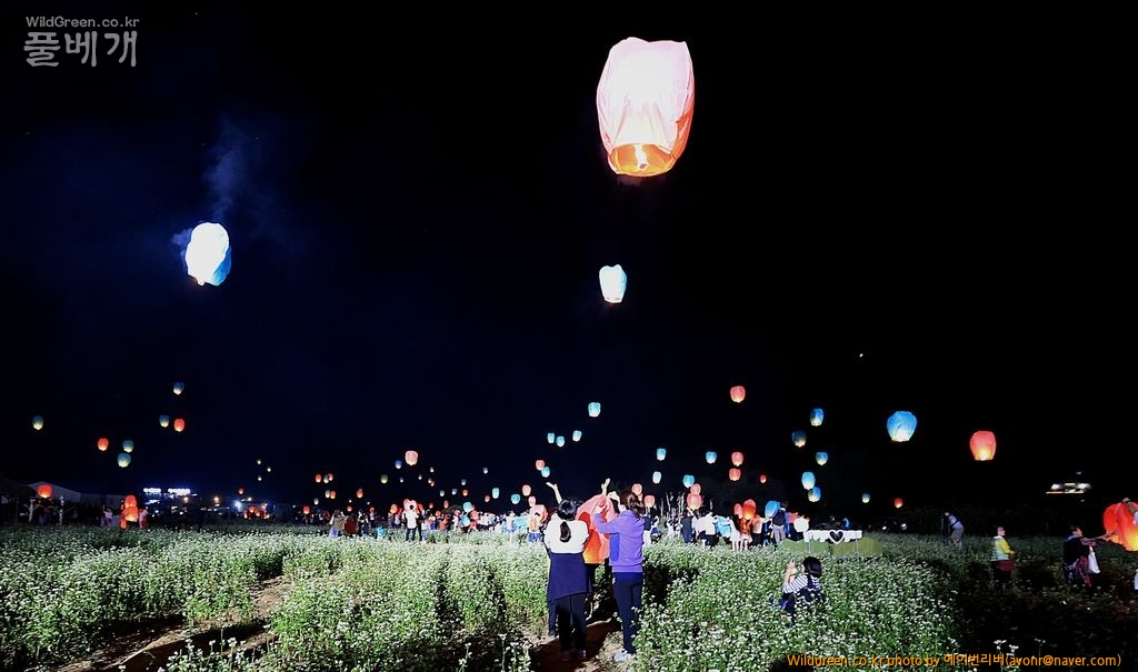 3O0A8655.JPG : 봉평 메밀꽃축제 풍등날리기
