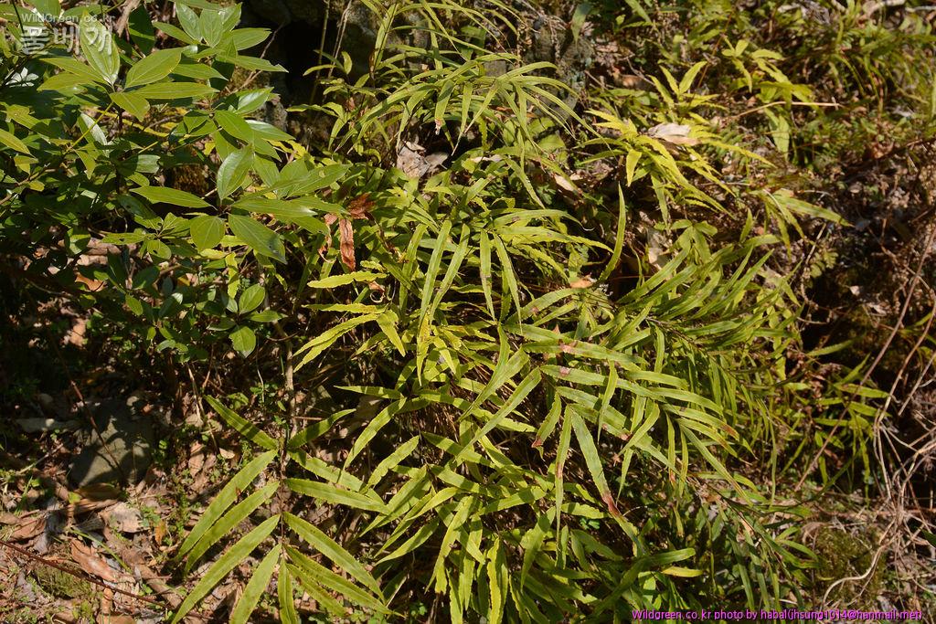 DSC_4873-2-1.jpg : 무슨 식물인가요??