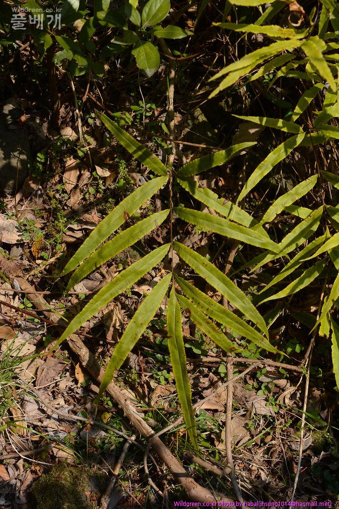 DSC_4874-2-1.jpg : 무슨 식물인가요??