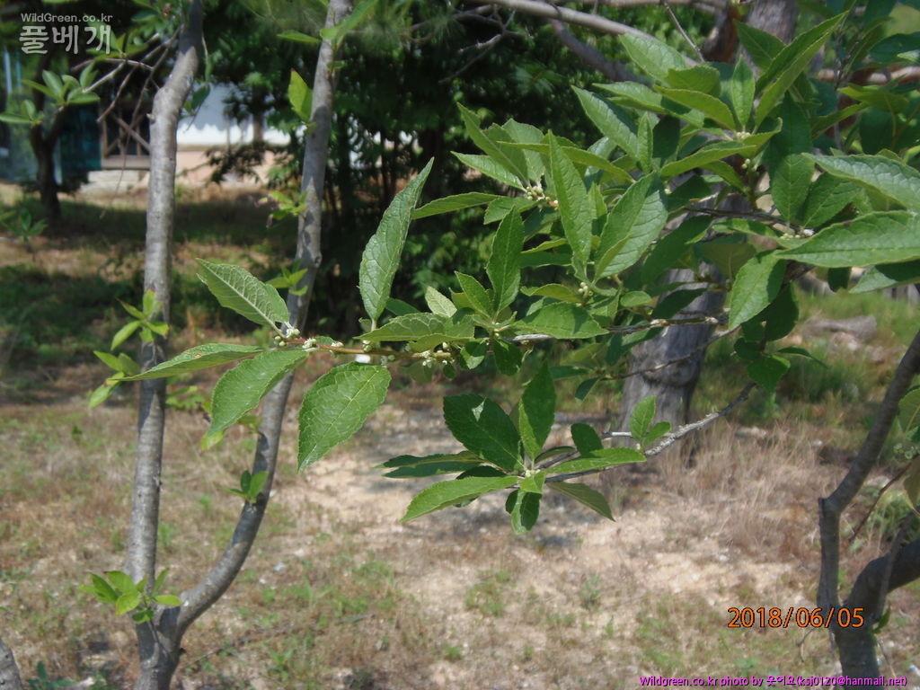 P6050012.JPG : 무슨나무인가요