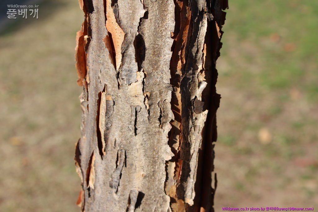 IMG_6275.JPG : 무슨 나무일까요?